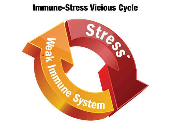 Stress-and-Immune-System